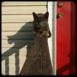 Stray Cat Strut; or, how our cat count grew 125% in six months