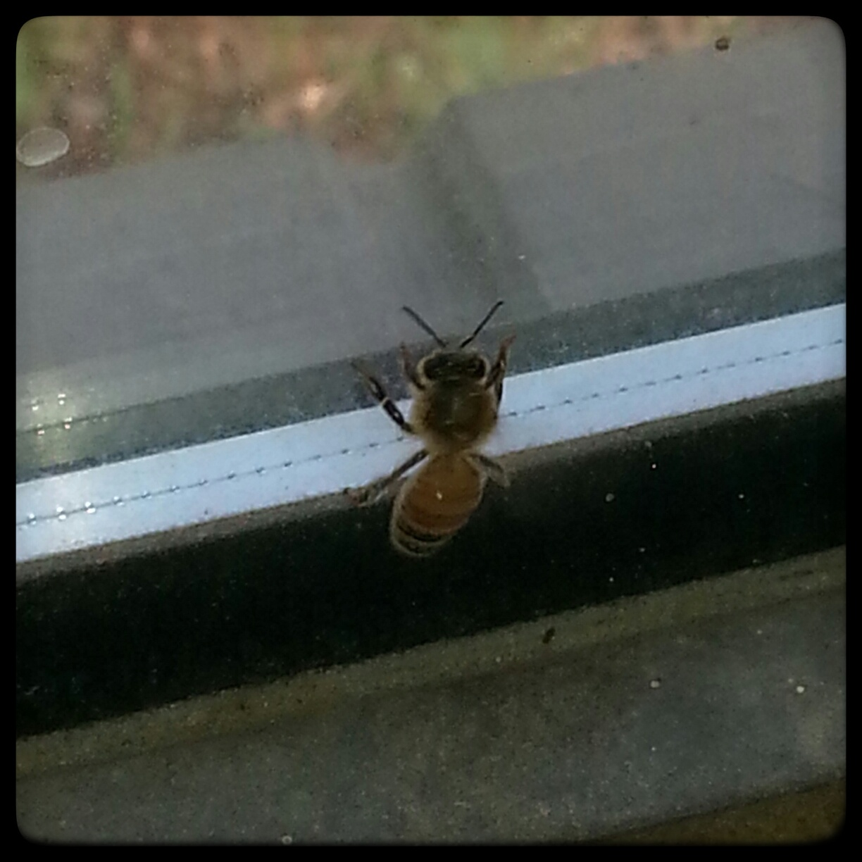 The Bee-pocolypse is over, y'all!