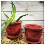 This Week Only: Rimmed planters with drainage trays